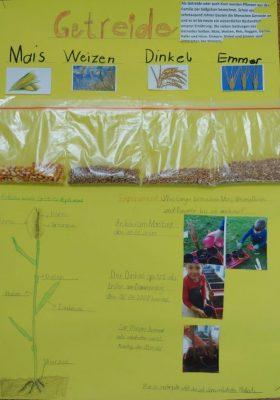 Lernplakat Getreide 1